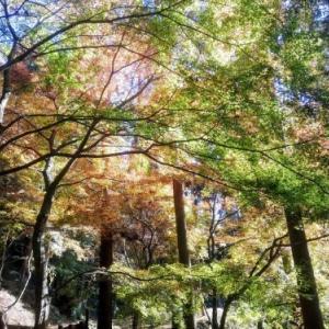 環境芸術の森(厳木町)