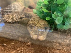 ヘビの正面顔(*´ω`*)