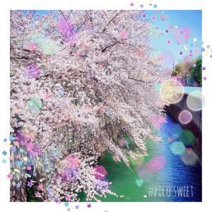★今年の桜と休校延長決定!★