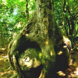 石をつかんだ木