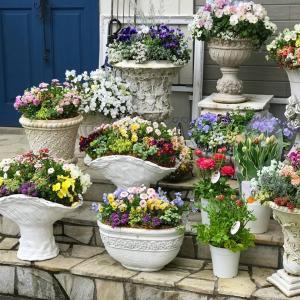 春色のお花たち♩