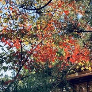 朝のじかん。紅葉を楽しみながら神社へ。