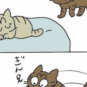 第529話 ユズの必殺技!?