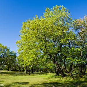 新緑の中の朝散歩