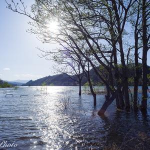 豊饒の湖(水窪ダム)水没林