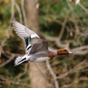 冬の晴れ間の野鳥撮影