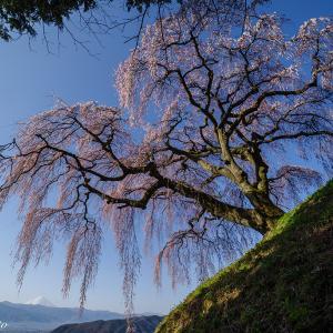 山梨県の1本桜