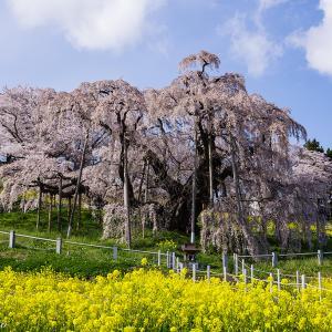 福島県古木の1本桜