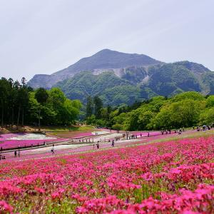 芝桜の羊山公園
