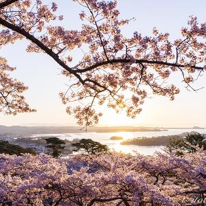 朝の西行戻しの松公園