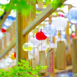 川越氷川神社 風鈴祭り