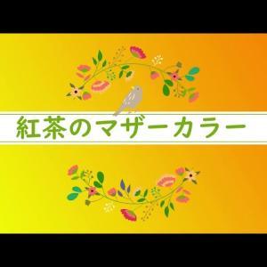 【動画】紅茶のマザーカラー