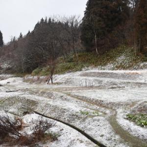 大荒れでしたが、積もらない雪に・・