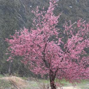 雨~雪~雨に、寒暖差に気を付けて!
