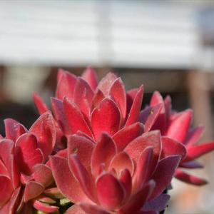 紅葉祭&リメ鉢作家さんの鉢がどんどん来ています