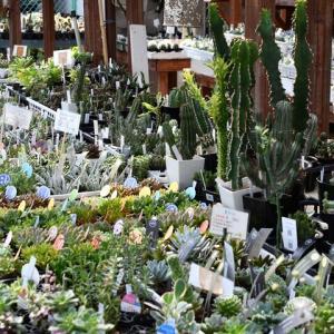 本日お休み 植物引き取りに行ってます