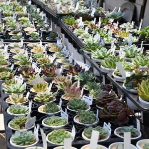 今日から まん延防止&入荷植物