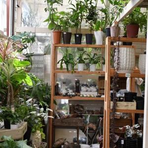 台風一過&入荷植物