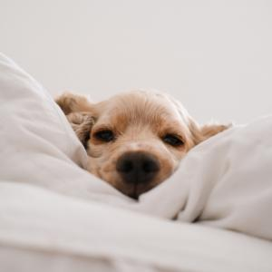布団に入って30秒で瞼が重くなり、30秒以内に寝落ちしてしてしまう睡眠パターンの作り方