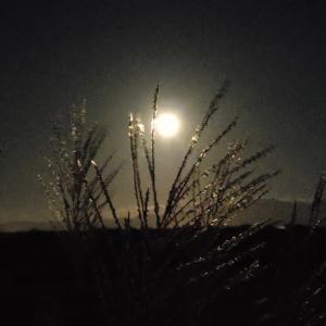 Harvest Moonは9月の満月?10月の満月? 秋分の日がカギとなるようです