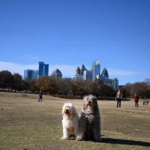 アトランタの公園散歩とラン
