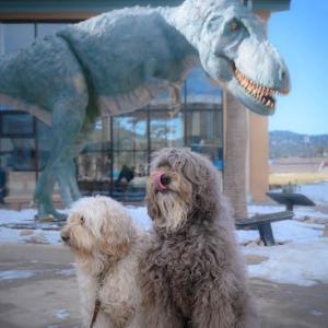 恐竜博物館、の前にて