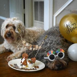 Happy 12th Birthday Heidy!
