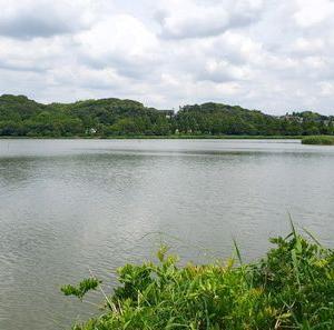 佐鳴湖でバードウォッチング