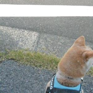 あなたの 後ろ姿が 好き・・・うぷ