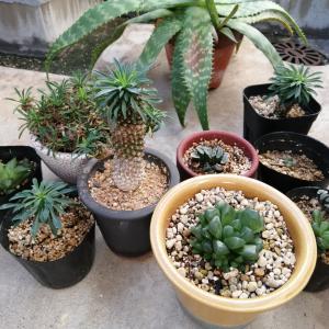 涼しくなってきました、植物の季節です