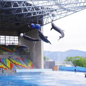 イルカたちのショーに感激しました♪-南紀白浜アドベンチャーワールドより-