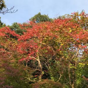 古城公園の紅葉もチラホラ