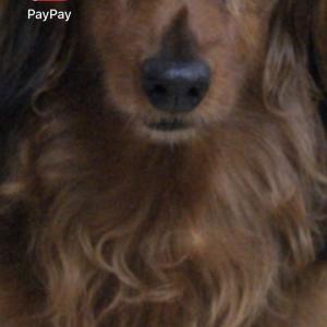 paypayデビューしましたー ٩(ˊᗜˋ*)و♪