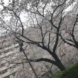 桜の記録2020