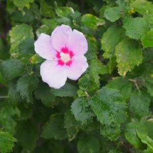 雑草倶楽部(2019年10月)・初出展の花も多いよ。^±^ノ