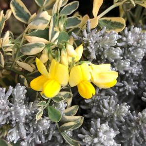 ベランダガーデンに、可愛いお花^_^