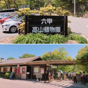 六甲高山植物園に行って来ました^_^