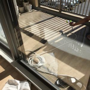窓掃除とトンボ