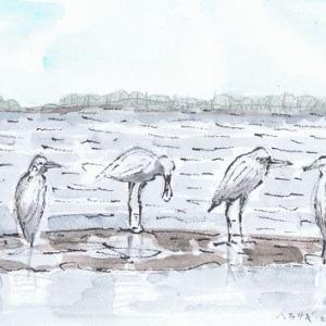 水鳥の模写