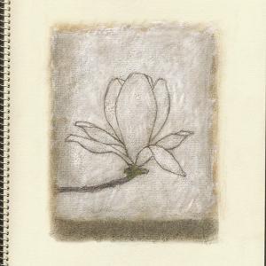 白木蓮 Magnolia Denudata XXV