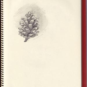 マツボックリ Pinecone  ‐ Seek Seed XIII