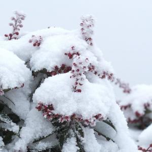 雪の久住山へ