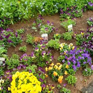 春の花が次々と