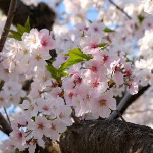 春の遠征 肝硬変(じゃなくて観光編)