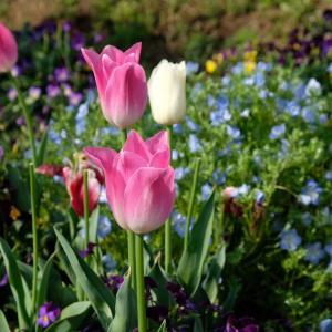 春の山菜収穫
