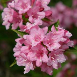 花壇の夏支度