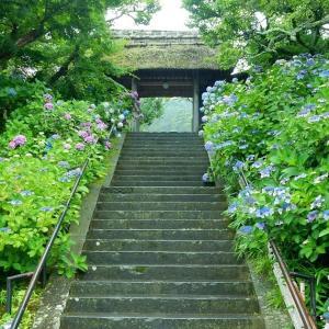 北鎌倉アジサイ情報!山門前がイイ東慶寺!2020/06/24