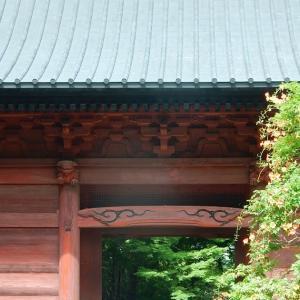 鎌倉:妙本寺のノウゼンカズラ2020/07/12