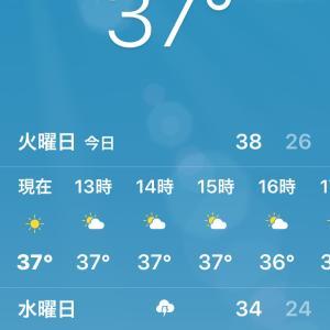 辛い暑さ… 。゚(゚ノД`゚)゚。