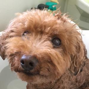 お風呂に入ってみた